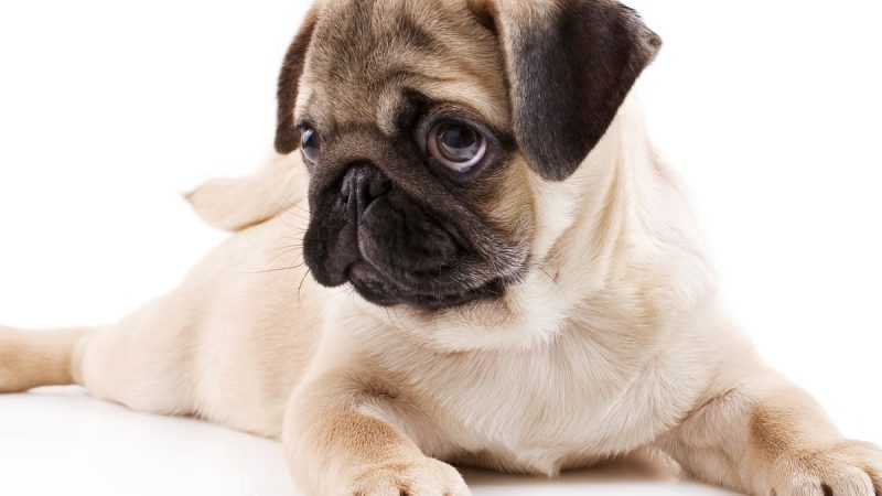 3 Reasons Why Your Dog Might Smell Bad