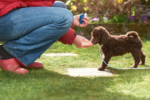 Weighing the Options: Group vs. Individual Lessons for Obedience Training